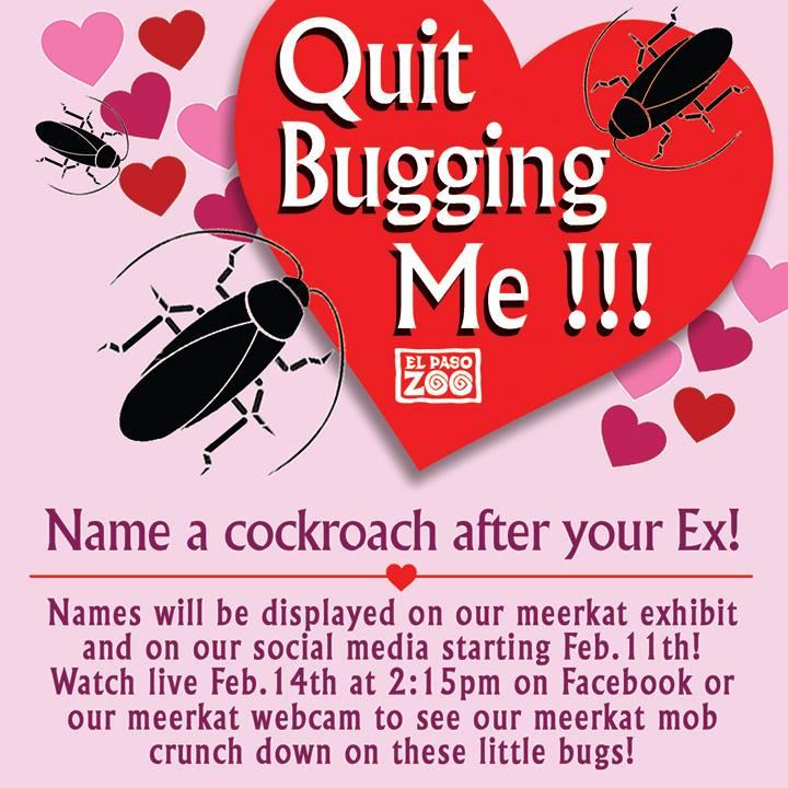 Vernoem een kakkerlak naar je ex